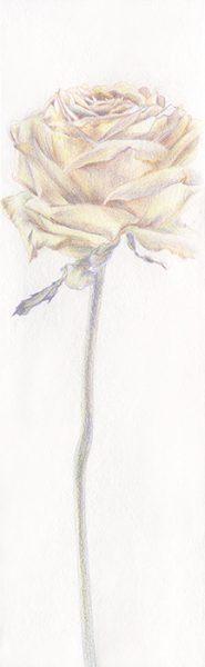 irina-rotaru-stella-maris